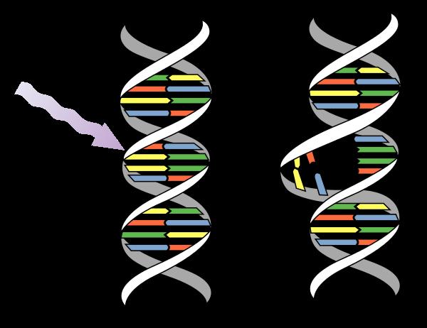 UVC Mutation